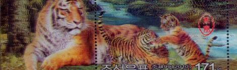Il ruggito della tigre