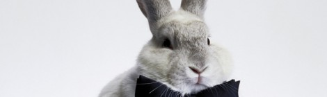 Il coniglio nel cappello