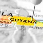 I rocchetti di cotone della Guiana